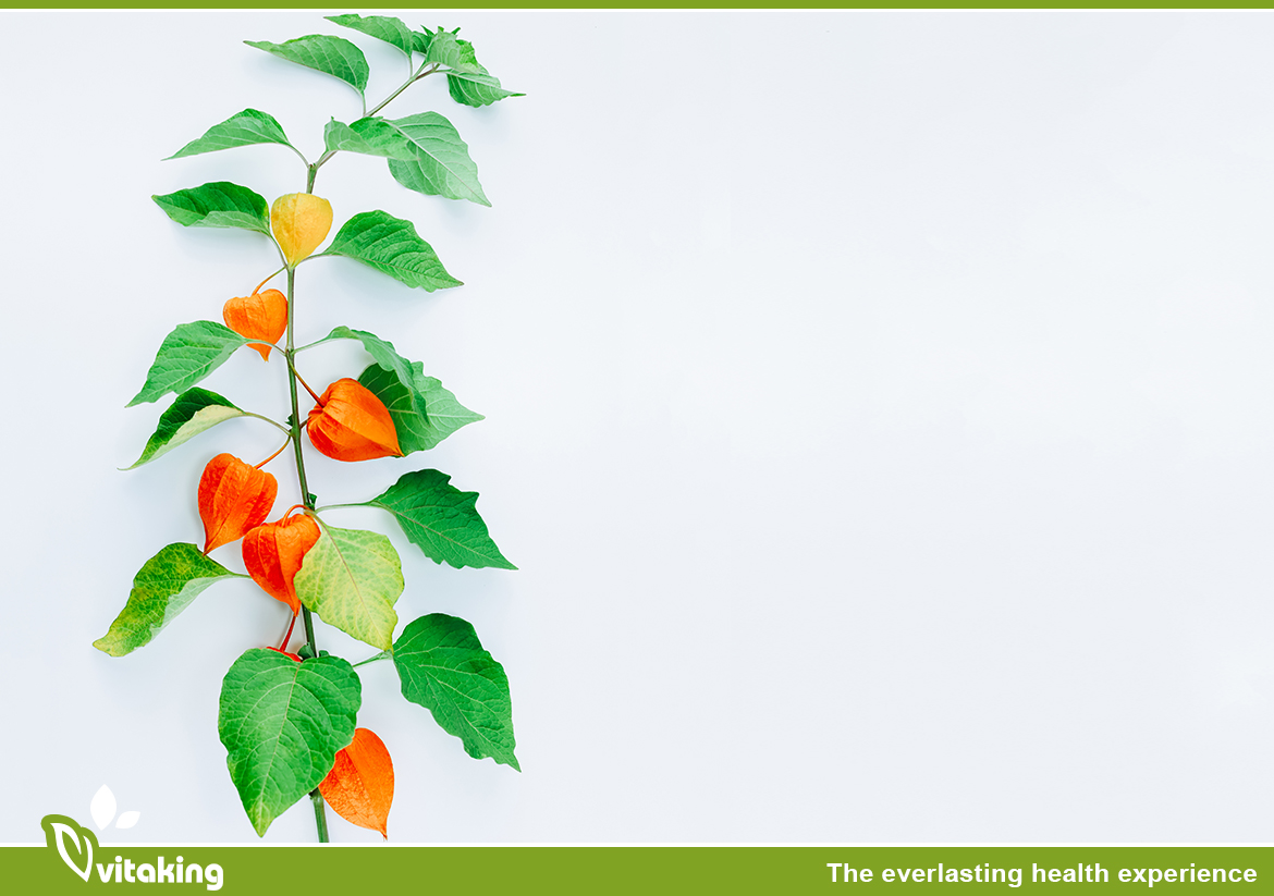 Ashwagandha: What are the positive benefits of your regular consumption?